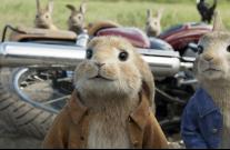 Кролик Питер